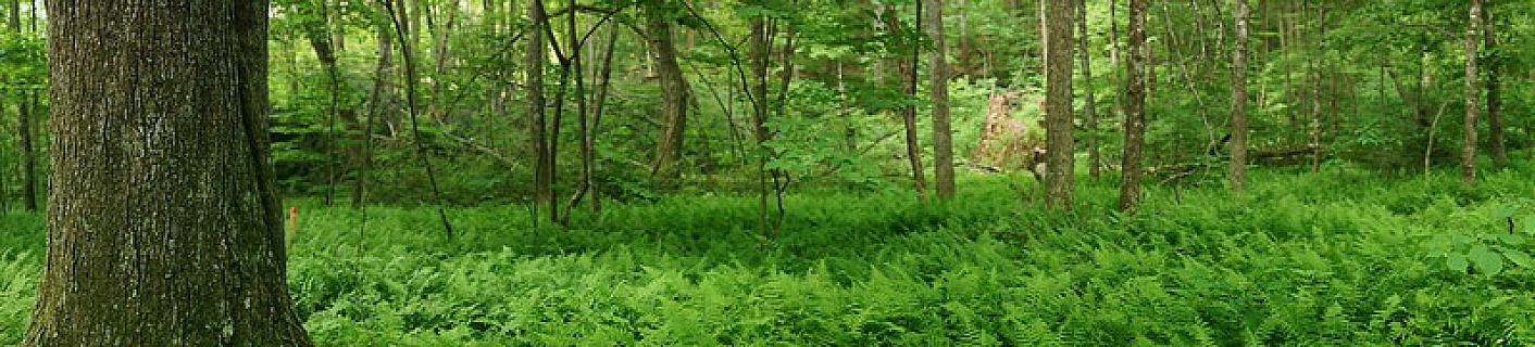 Wooden Glen